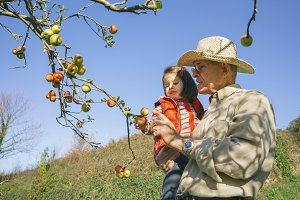 Senior man and little girl picking apples from tree