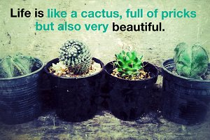 Cactus quotation