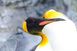 Penguin closeup in Hokkaido,Japan