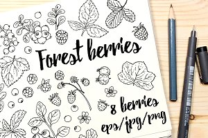 Vector drawings forest berries