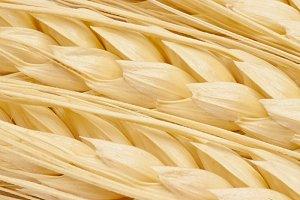 Wheat ears detail