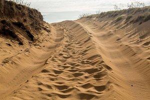 Tire tracks in sandy beach scene