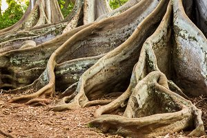 Deep roots of Jurassic Park tree