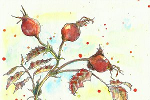Watercolor and ink dog-rose painting