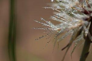 Depth of Dandelion