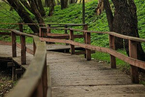 Wooden walkway in the forest.