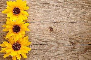 Ornamental sunflowers