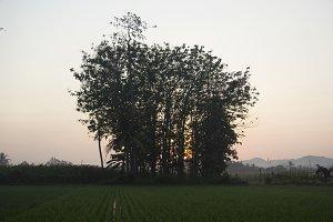 Landscape in Village #1