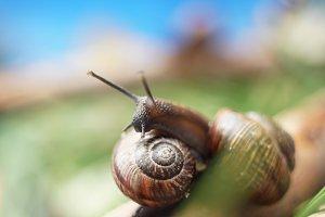 snail meeting