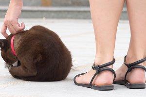 Woman rub the cat head