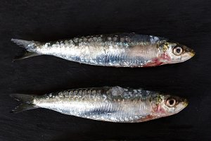 Close-up of dead fish
