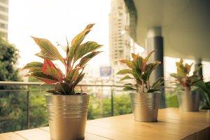 Pots of plant in urban vintage