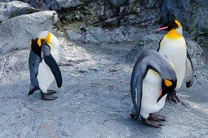 Penguins in Hokkaido,Japan