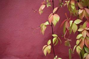 foliage and wall