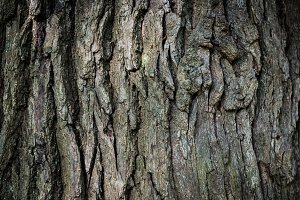 Brown oak bark
