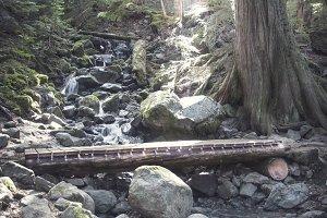 Bridge in Whistler Woods