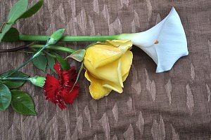 carnation, calla lily and rose