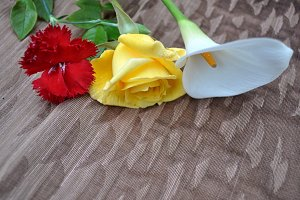 carnatio, rose and calla lily