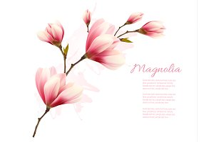 Nature Background With Magnolia