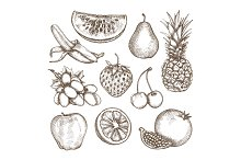 Fruit, sketches