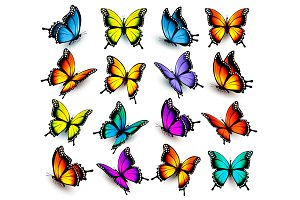 Big Collection Of Color Butterflies