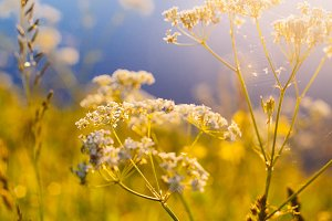 Soft Focus With Grass And Flowers