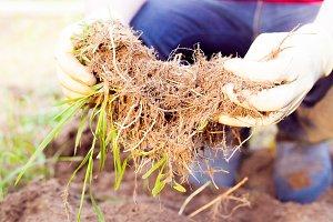 Farmer planting harvesting