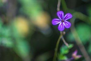 Blue macro flower