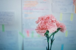Carnations in office