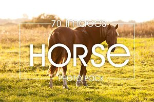 Horse - 70 images