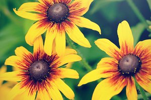 Decorative sunflowers