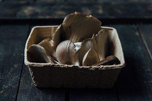Oyster mushroom photo bundle