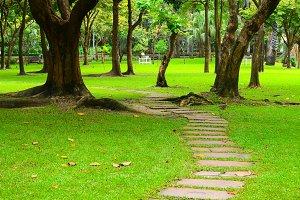 curving walkway in the garden