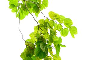branch with green leafs