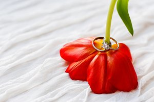 Wedding rings on red tulip