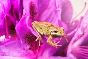 Tiny frog in flowers