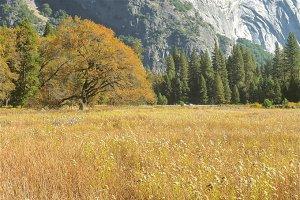 Nature in Yosemite