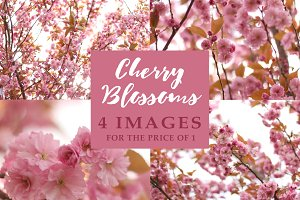 Cherry Blossoms - 4 images for 1