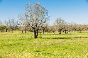 Green grass on a golf field, Alberca, Castilla y leon
