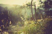 iseeyouphoto summermeadow 1