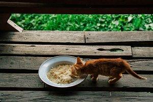 Eatin Kitten