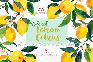 Lemon Citrus -Watercolor Set