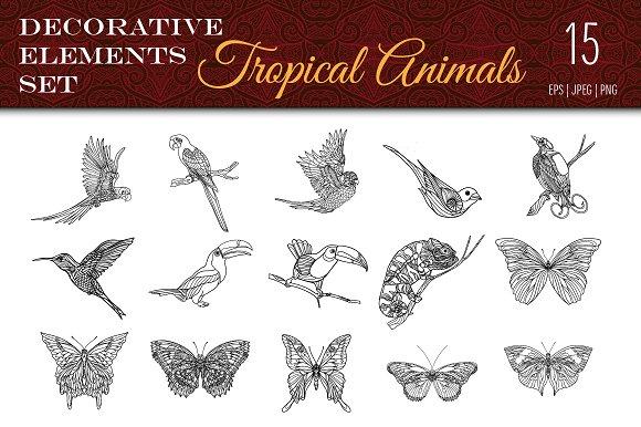 Tropical Wild. Birds, Butterflies. - Illustrations
