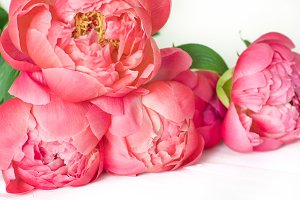 Styled Instagram Photo - Peonies