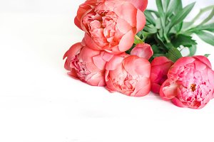STYLED STOCK PHOTO - PEONIES III
