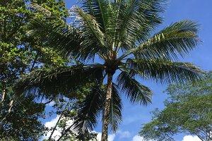 Palm trees tropics