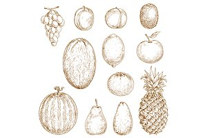 Sketches of fresh harvested fruits