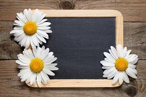 Daisy flowers and blackboard