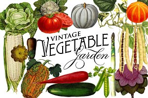 Vintage Vegetable Botanical Graphics