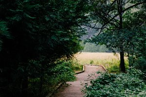 Wooden Path Into a Meadow
